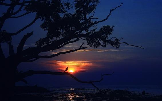 Papéis de Parede Pôr do sol, mar, árvore, pássaro, crepúsculo, noite