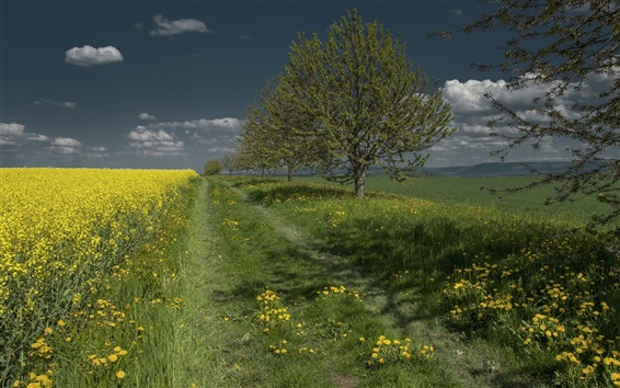 Wallpaper Trees, field, grass, rape flowers, dandelion, clouds