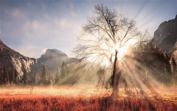 Обои США, Калифорния, Йосемитский национальный парк, зима, дерево, солнечные лучи, горы