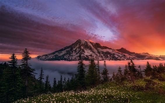 Обои Вашингтон, США, стратовулкан, Ренье, рассвет, красное небо, деревья, цветы