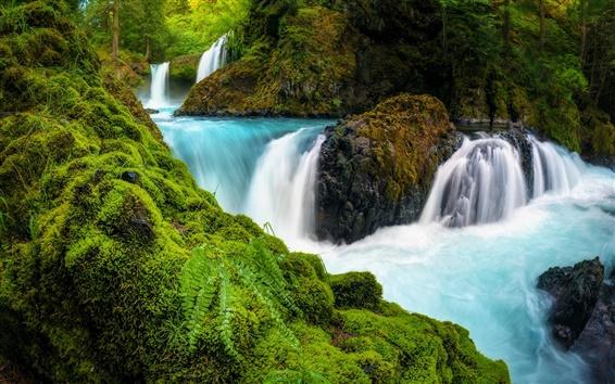 Fondos de pantalla Cascadas, garganta del río Columbia, Washington, EE.UU., piedras, musgo