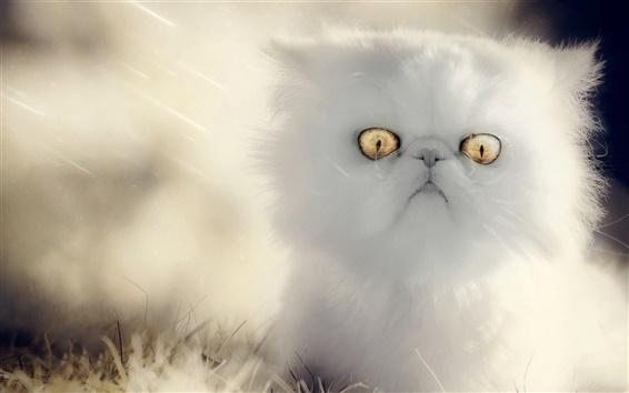 Papéis de Parede Gatinho branco, olhos amarelos, peludo