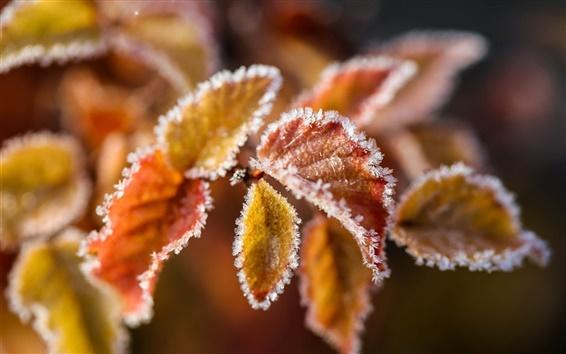 Обои Зима, листья, снег, лед, мороз, боке