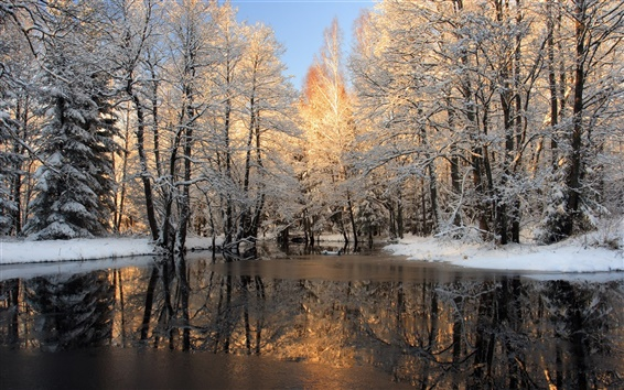 Wallpaper Winter, snow, forest, trees, ice, lake