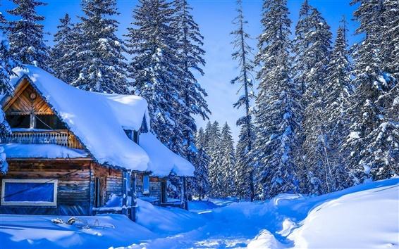 壁紙 冬、厚い雪、ハバロフスク地方、ロシア、家、森、木