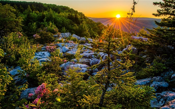 Wallpaper Allegheny Mountains, West Virginia, USA, sunset, plateau, trees