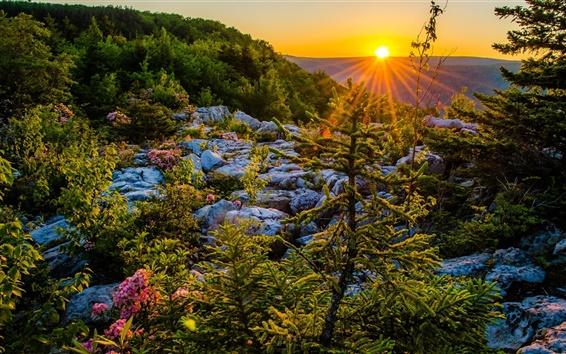 Обои Allegheny горы, Западная Вирджиния, США, закат, плато, деревья