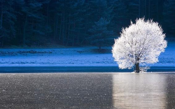 Fond d'écran Alpes-Maritimes, France, forêt, lac, glace, le givre, arbre blanc, hiver