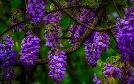 Fond d'écran Fleurs bleues, inflorescence, branche
