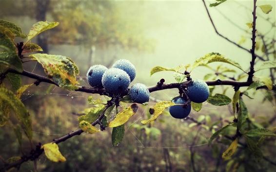 Fond d'écran Les bleuets, des brindilles, des gouttes d'eau, feuilles, forêt, brouillard