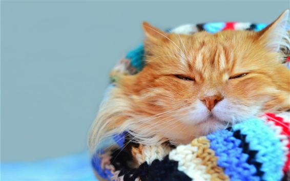 Обои Взгляд кота, теплый, шарф, боке