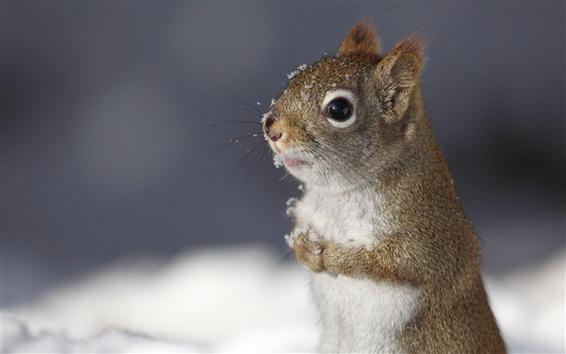Papéis de Parede Pequeno animal bonito na neve do inverno