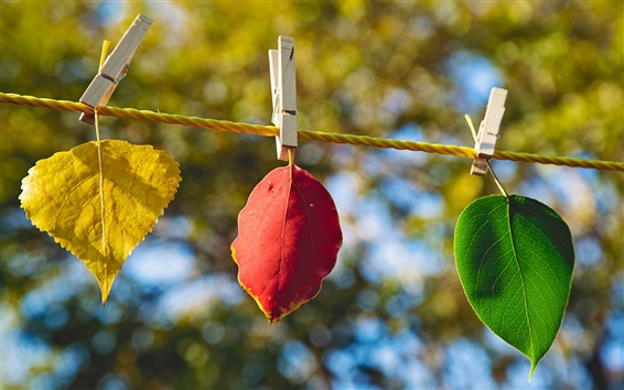 Fond d'écran Différentes feuilles de couleur, jaune, rouge, vert