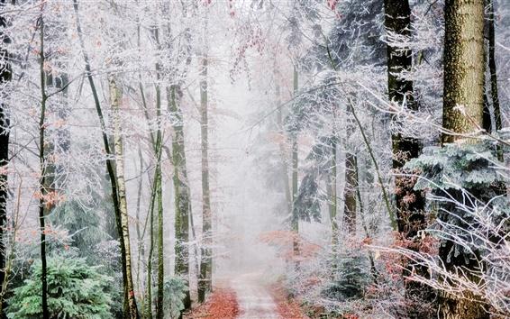 Обои Лесная тропа, деревья, иней, туман, осень