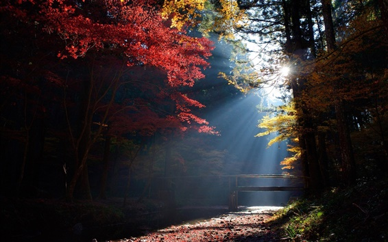 Wallpaper Forest, trees, bridge, sun rays, autumn
