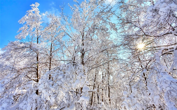 Wallpaper Forest, trees, winter, thick snow, blue sky