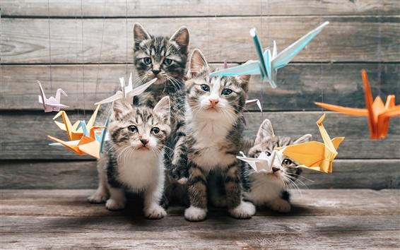 Papéis de Parede Quatro gatinhos, suiças, olhar, pássaros de papel, origami