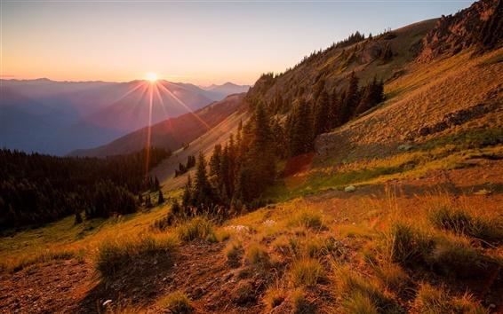 Wallpaper Hillside, mountains, trees, sunset