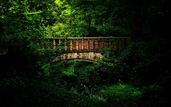 Обои Мадрид, парк, деревья, лето, мост