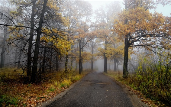 Wallpaper Morning, road, forest, autumn, fog