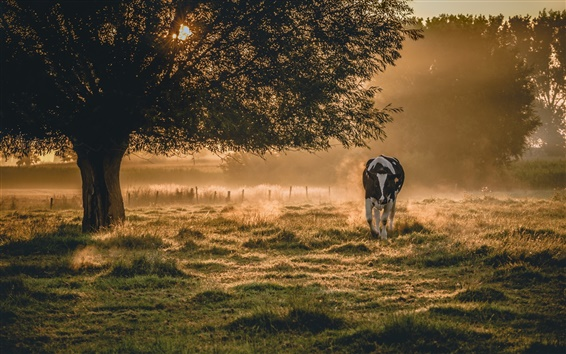 Wallpaper Morning scenery, fog, cow