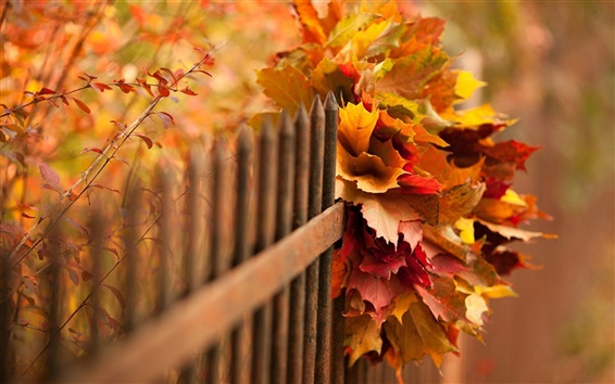 Wallpaper Nature, autumn, leaves, bokeh, fence