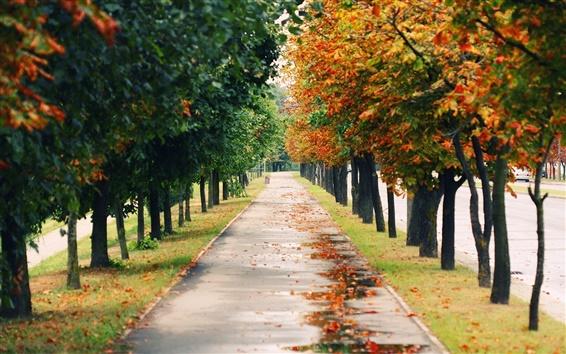 Wallpaper Nature landscapes, park, trees, road, autumn