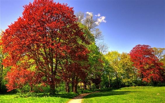Wallpaper Park, trees, grass, sunny, autumn
