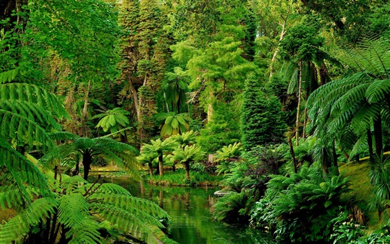 Wallpaper Portugal, gardens, tropical, forests, river, green