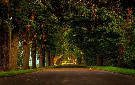 Papéis de Parede Estrada, natureza, floresta, parque, árvores, folhas