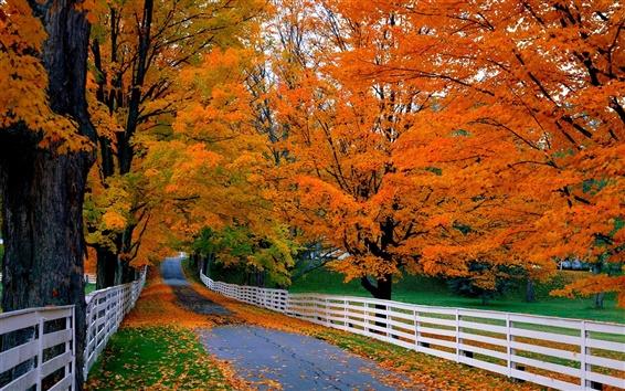 Papéis de Parede Estrada, árvores, cerca de madeira, outono, grama, folhas vermelhas