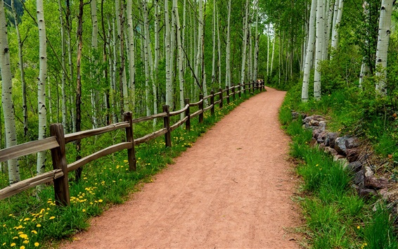 Wallpaper Road, trees, wood fence, wildflowers