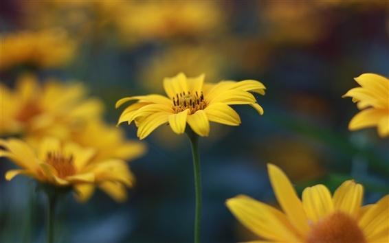 Wallpaper Yellow flowers, grass, bokeh
