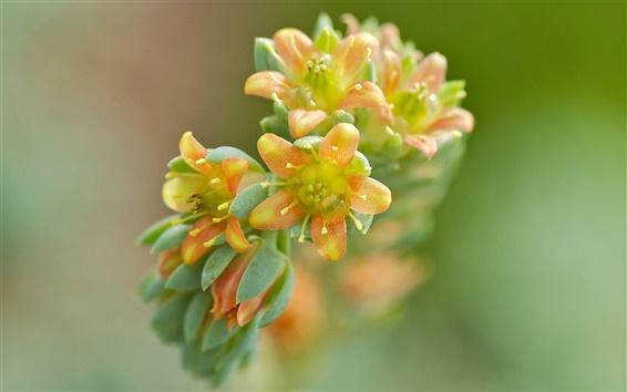 배경 화면 노란색 - 오렌지 꽃, 배경 흐림