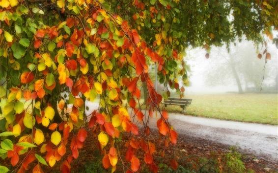 Fond d'écran Feuilles rouges jaunes, parc, banc, route, automne