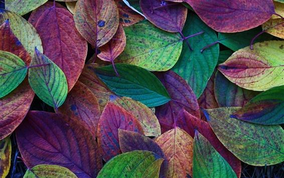 Fondos de pantalla Otoño, hojas, verde, morado, rojo