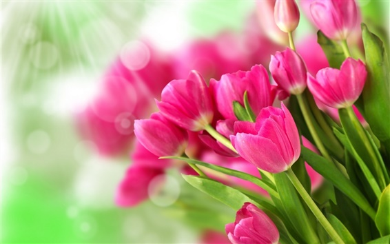 Wallpaper Bouquet pink flowers, tulips, sunlight