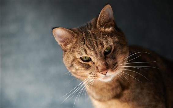 Wallpaper Brown color cat, whiskers, bokeh