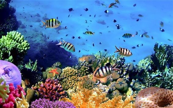 Wallpaper Colorful tropical fish, coral, underwater, ocean