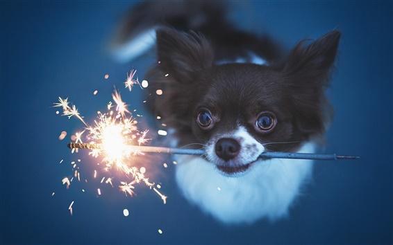 Wallpaper Cute dog play fireworks