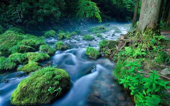 Papéis de Parede Floresta, rio, córrego, pedras, grama, nevoeiro