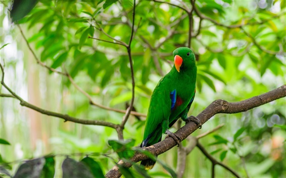 Wallpaper Green feathers bird, parrot, forest, leaves