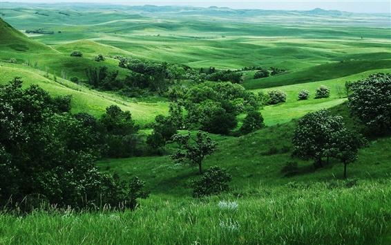 Wallpaper Green nature, grass, trees, slope