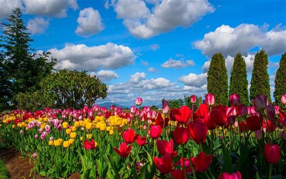 Fondos de pantalla Muchas flores, tulipanes, campo, árboles, cielo, nubes