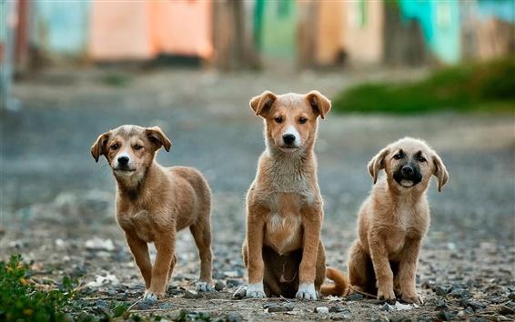 Papéis de Parede Três filhote de cachorro engraçado close-up