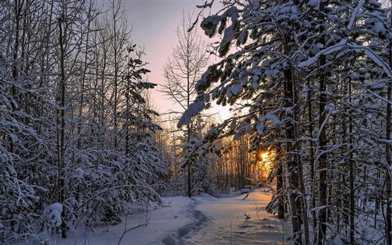 Обои Зима, лес, густой снег, деревья, закат