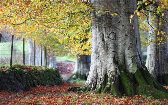 Обои Осень, деревья, листья, природа пейзаж