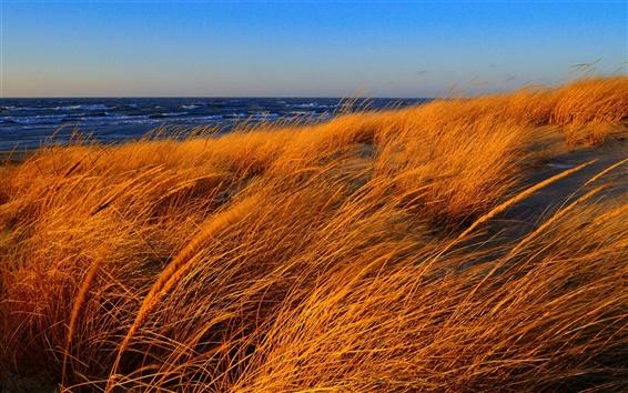 Обои Пляж, море, трава, осень, ветер