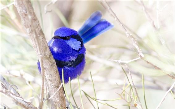 Wallpaper Bird close-up, blue feathers