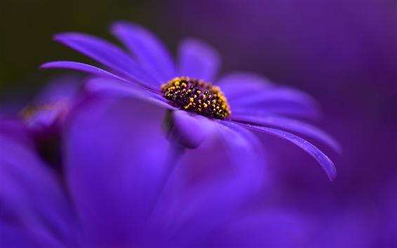 Papéis de Parede flor azul close-up, pétalas, borrada